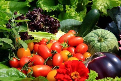 武汉向石家庄捐赠50吨蔬菜 志愿者自发捐赠